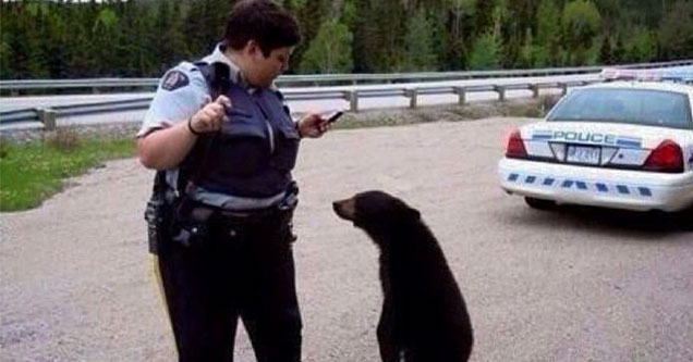 police officer giving a black bear a ticket