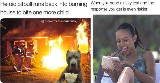 a pitbull staring away from a house that is on fire, a lady receiving a funny text