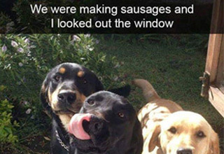 dogs outside a window who smell food and licking their chops