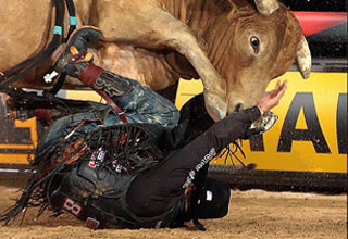 a bull about to trample a rodeo guy