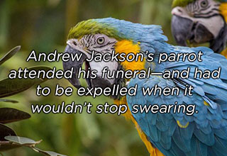Andrew Jackson had a foul mouthed parrot