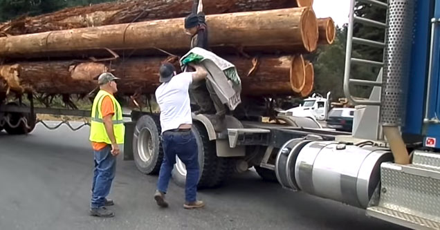 a truck driver wearing a high visibility vest watches his partner yank a protester down from the side of his log truck
