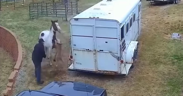a horse being attacked by a pitbull