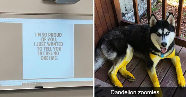an encouraging note from a school teacher saying he is proud of his students and a husky covered in yellow pollen from running through a field of dandelions