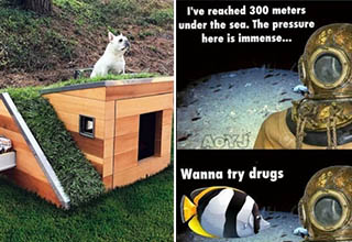 a dog sitting on its house, a scuba diver being offered drugs by a fish