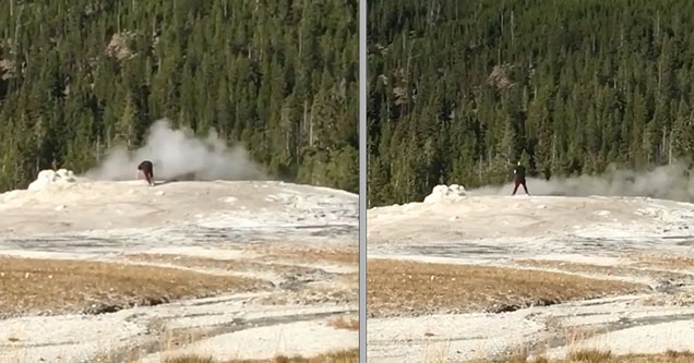A man walked up to Old Faithful geyser in Yellowstone National Park and urinated in it on Friday, September 14, 2018.