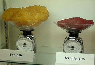 muscle and fat side by side on scales