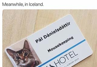 a cat's id that says mousekeeping and a female johnny bravo cosplay