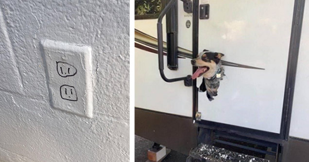Fake outlet and a dog poking his head out a door.