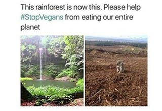 the rainforest torn down over vegans and a lady who used makeup on half of her face