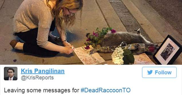 Woman leaving a note for a dead raccoon on the sidewalk in Toronto