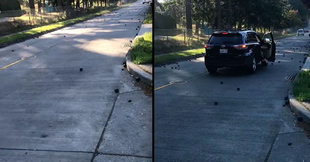 Steel balls roll down a steep hill in Seattle, Washington after a truck carrying them accidentally dropped them into the street. in October of 2018.