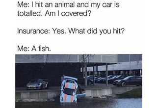 a nice sports car falling into water and a meme about hitting a fish