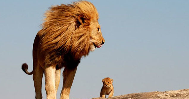 Lion and his cub.