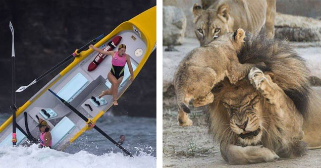 a woman falling out of a boat that is flipping upside down, and a lion cub attacking its father