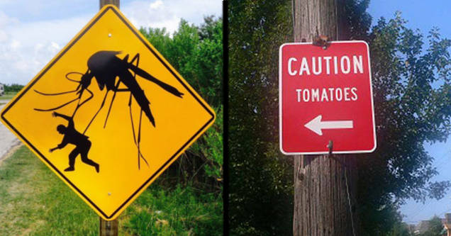 Giant mosquito attacking man sign. caution tomatoes sign.