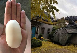 an egg that is shaped rectangularly and a dragon that is on top of a garage