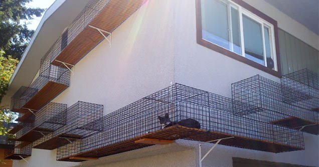 Cat enclosure on the outside of a house.