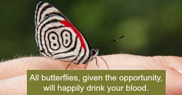 a butterfly on a man's hand with a fact about how they drink blood