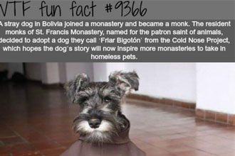A dog who became a friar.
