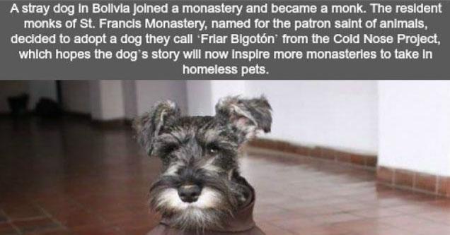 A dog who became a friar.