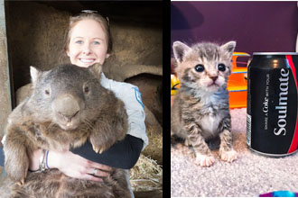 Woman with a wombat and a kitten next to a soda.