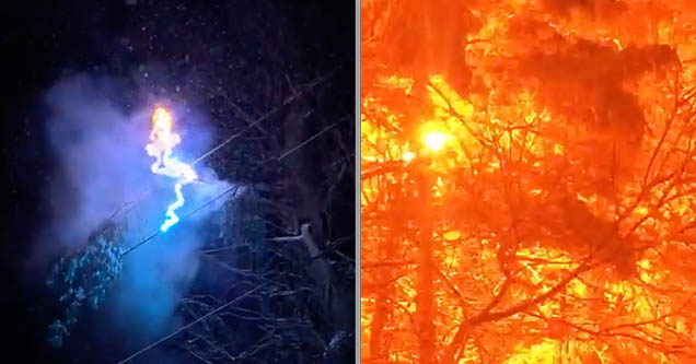 A power line is creating an electrical arc from the branch of a pine tree and causing fire in different colors to appear outside of a home in Arden, North Carolina in 2018.