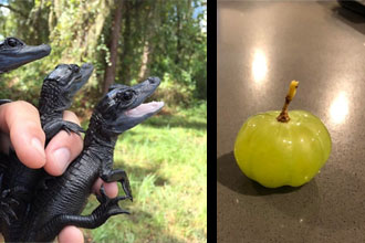 Some black lizards and a grape that looks like a pumpkin.