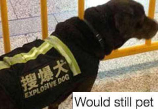 a photo of a bomb sniffing dog in a vest that says explosive dog and text that says i would still pet it
