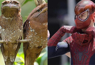 two goofy looking birds and spiderman without his mask on