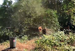 a tree falling in a clearing near equipment
