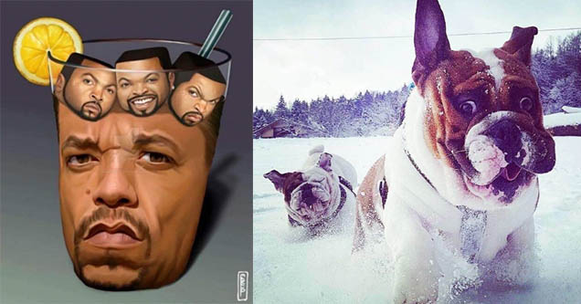 Ice T as iced tea with Ice Cube Ice Cubes. Two dogs in the snow making derp faces.