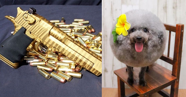 a golden gun with golden bullets and a fluffy puppy with a funny haircut