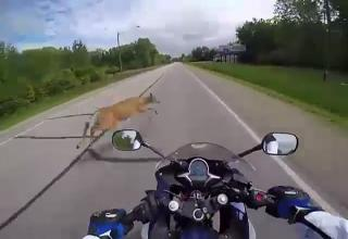 Guy On Motorcycle Pulls Next To Car And Crashes
