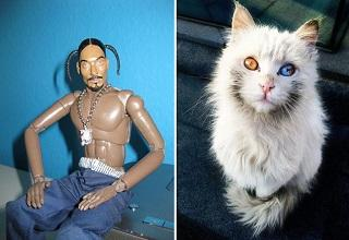 snoop dogg doll and a cat with two different colored eyes