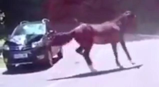 car gets wrecked by a wild horse