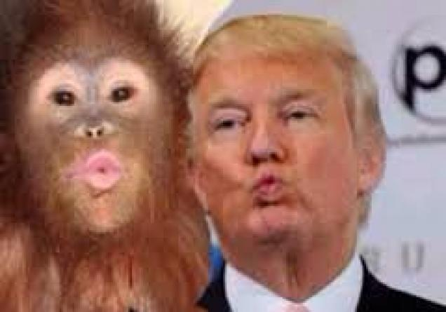 85019385 - Idiot Donald Trump Is Like an Aggressive Chimp - USA and Canada