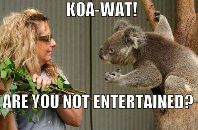 koala bear meme together we can