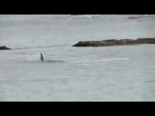 Dog and diver have close call with orcas view on ebaumsworld.com tube online.