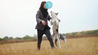 Border Collie Performs 50 Dog Tricks view on ebaumsworld.com tube online.