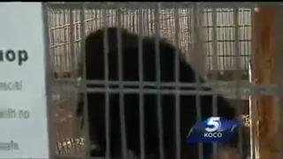 Female Worker at Oklahoma Animal Park Loses Her Arm To A Tiger view on ebaumsworld.com tube online.