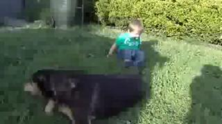 Dog Teaches Baby How To Roll Over view on ebaumsworld.com tube online.