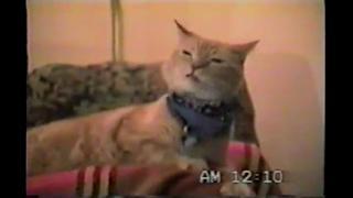 Singing Cat-Bob Seger's Old Time Rock N Roll view on ebaumsworld.com tube online.