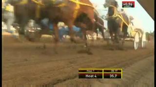 3 Horses Died In Crash At Calgary Stampede Video Ebaum