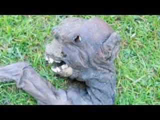Alien Like Creature Discovered In South Africa view on ebaumsworld.com tube online.