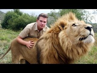Lion Tamer Teenager In South Africa view on ebaumsworld.com tube online.
