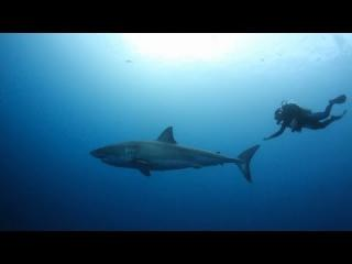 Swimming With A Great White Shark view on ebaumsworld.com tube online.