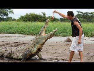 Feeding Deadly Wild Crocodiles By Hand view on ebaumsworld.com tube online.