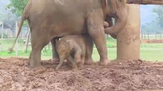 Baby Elephant Navann's Outing view on ebaumsworld.com tube online.