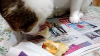 Cat love Durian view on ebaumsworld.com tube online.
